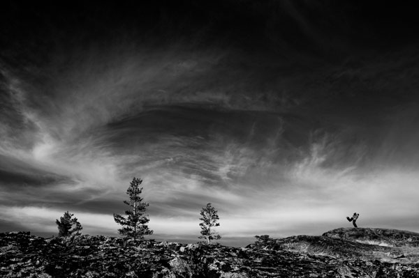 black and white photo of wedding location with trees, photo by Matt Theilen of Theilen Photography   via junebugweddings.com