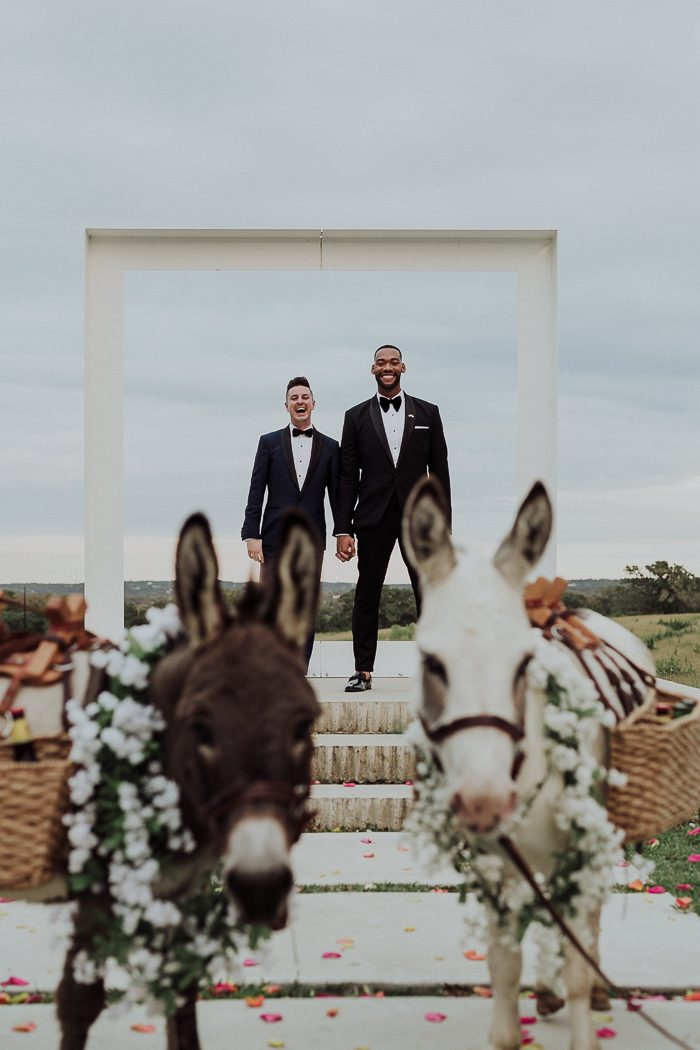 Same sex couple holding hands with two donkeys