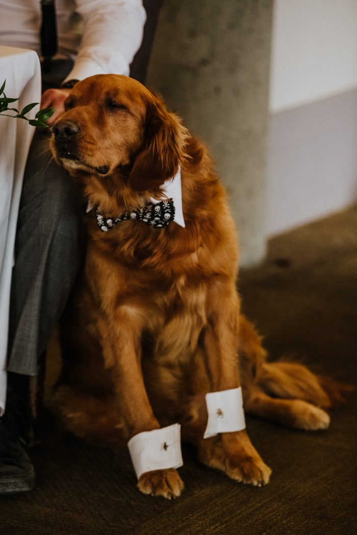 dressed up dog at wedding