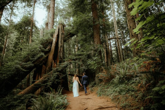 wedding couple walking in forest