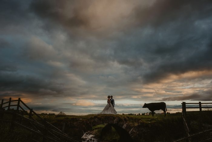 wedding couple on field at blue hour with cow
